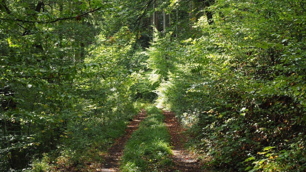 Ahrtal - verwunschener Waldweg - Ich hatte einen Lauf