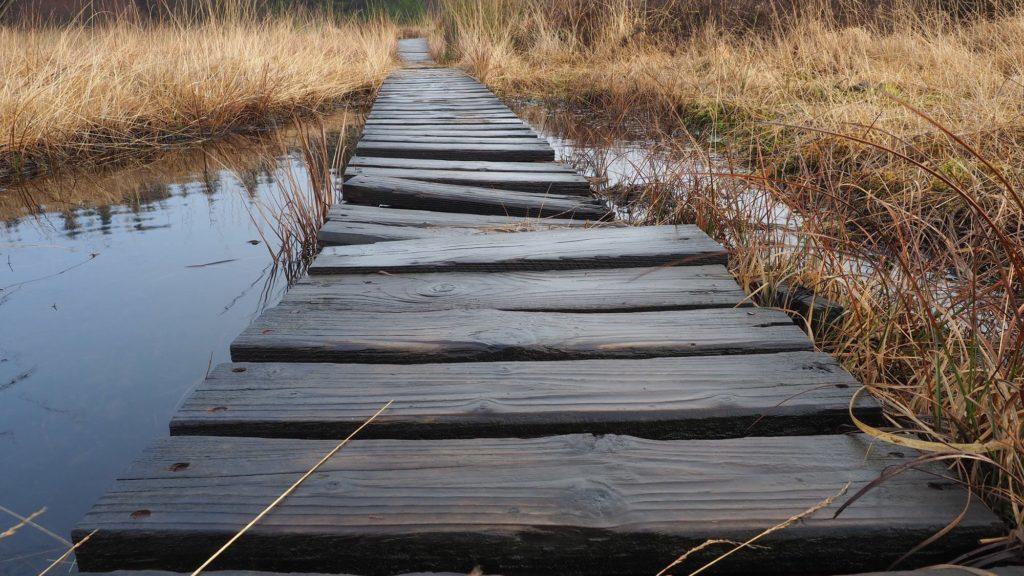 Das Plus auf der Waage - der wacklige Holzsteg im Hohen Venn